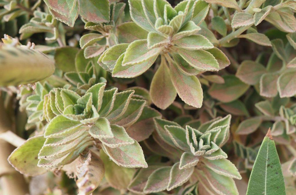 PAMacée, une enquête à la découverte des plantes qui soignent